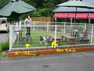 DogCafe8