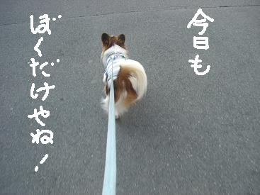 ichigay.jpg