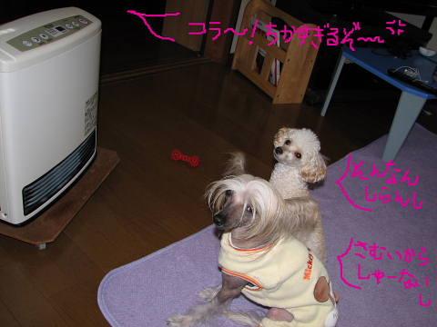 conv0049_20120112205532.jpg
