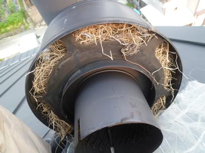 鳥の巣03