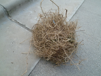 鳥の巣04