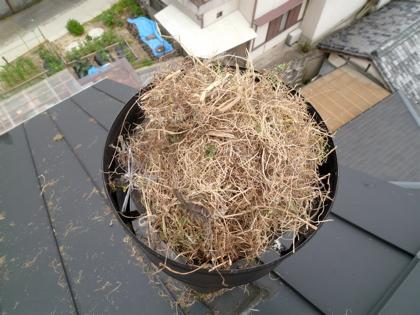 鳥の巣02