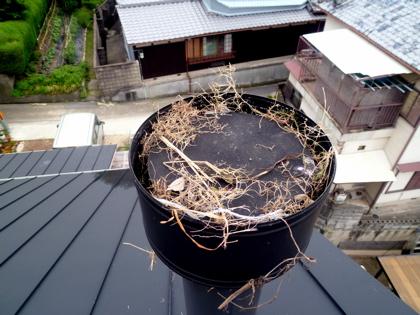 鳥の巣01
