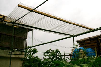 トマトの屋根