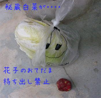 白菜さんとおてだまさん
