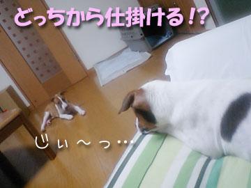 20070912-01.jpg
