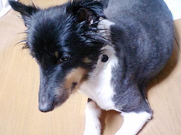 20071007-02.jpg