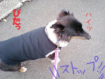 20071107-05.jpg