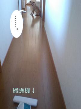 20080211-01.jpg