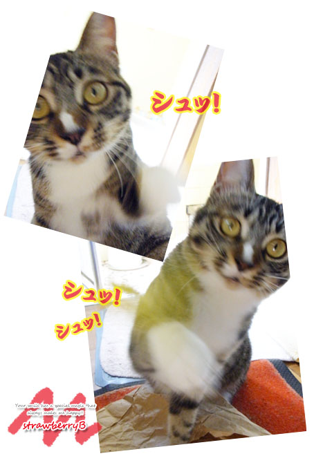 20110616_103.jpg