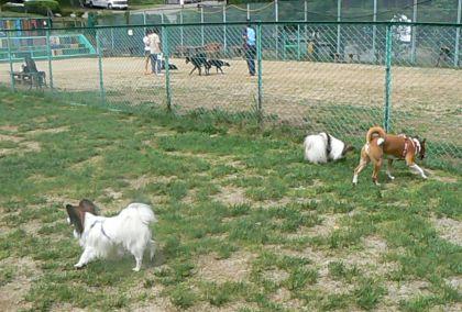 小型犬用ドックラン