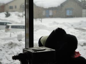 犬、外 雪