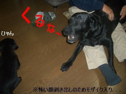 CIMG3543_2.jpg