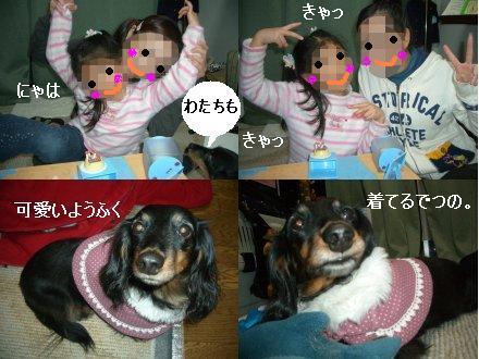 CIMG3699_1.jpg