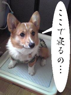 Image094.jpg