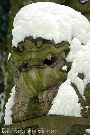 雪降る神社01