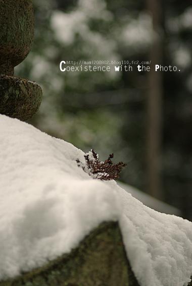 雪降る神社05
