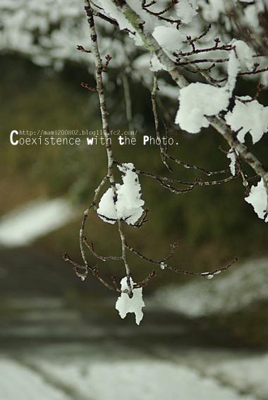 雪降る神社07