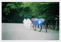 伊勢神宮2011神馬