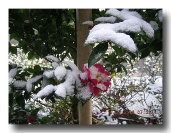 雪の中に・・・