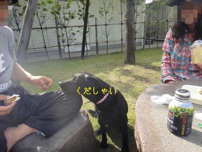 b2011 05 21_8485