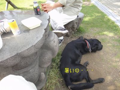 b2011 05 21_8488