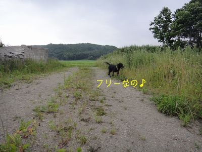 b20110729-DSC09495.jpg