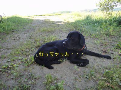 b20110801-DSC09588.jpg