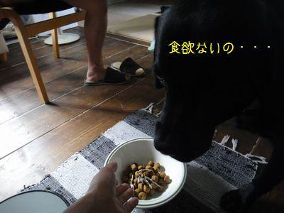 b20110810-DSC09906.jpg
