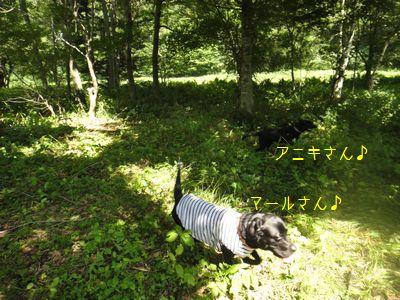 b20110811-DSC09963.jpg