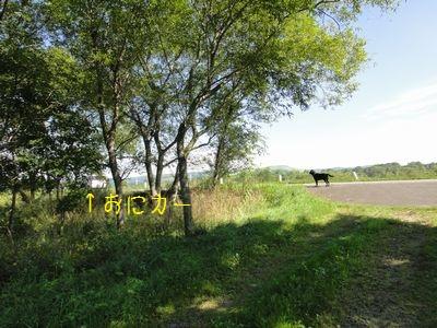 bb20110829-DSC00218.jpg