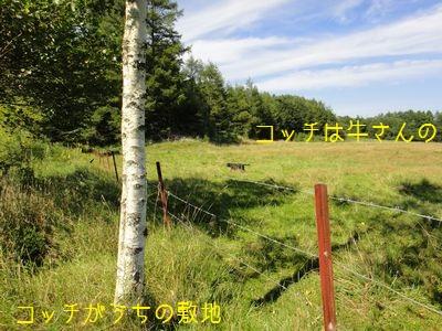 bb20110829-DSC00222.jpg