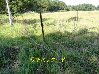 bb20110829-DSC00227.jpg