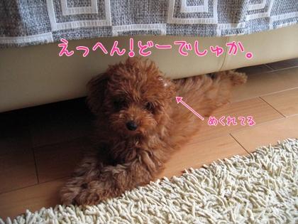 29_01.jpg
