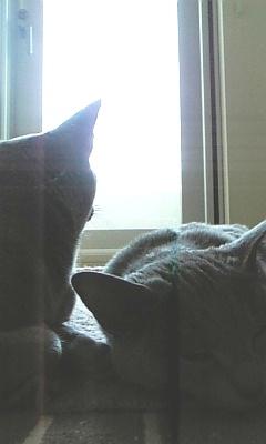 ぱるは外を眺めています
