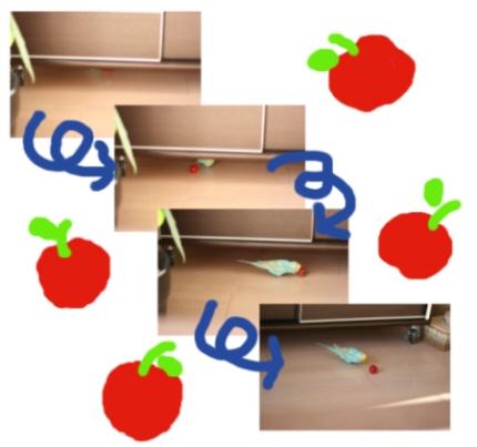 リンゴ追いかけて?