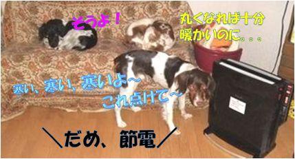 20110309-06.jpg