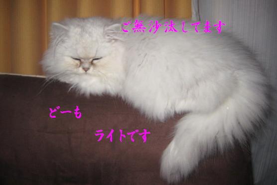 IMG_2582.jpg