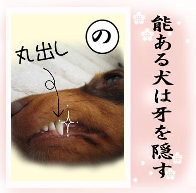 karuta-no.jpg