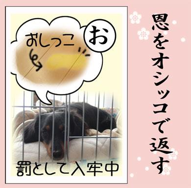 karuta-o.jpg