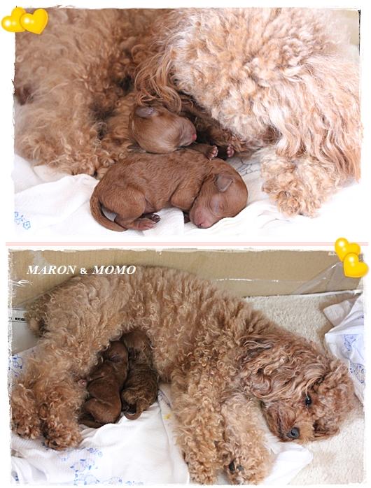 出産3日後-3