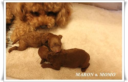 出産3日後-4