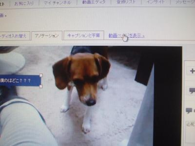 DSCF1898_convert_20110308135646.jpg