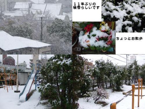 雪降ったのよ♪~♪~♪