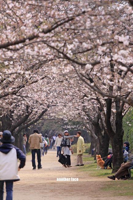 0402-Sakura10.jpg