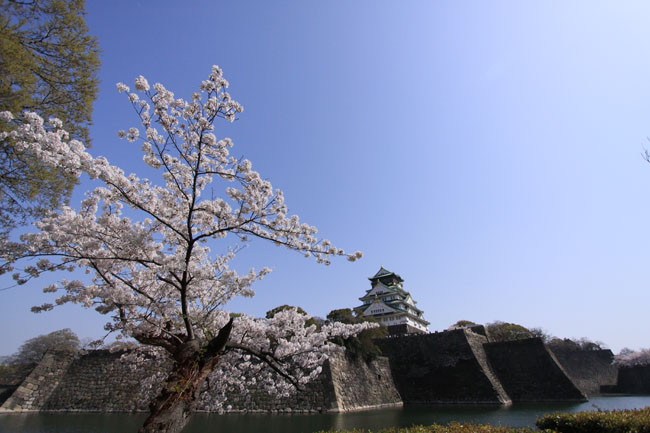 0410-SAKURA-OSAKA-JHO 039