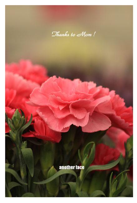carnation1.jpg