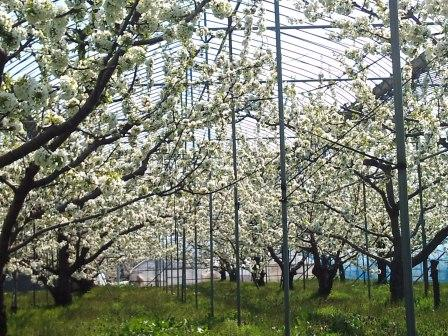 2011.05.05もぎ取り園 (4)