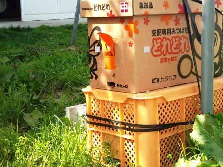 2011.05.05もぎ取り園蜂