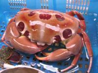 2007.2.15沖縄2